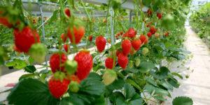 Home Berry Box comanda, amazon - România