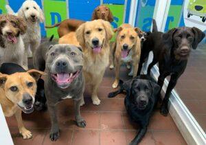 Good Doggie mercadona, amazon - España
